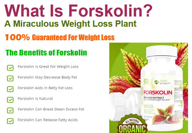 Forskolin Weight Loss Belly Fat Burner forskolin side effects
